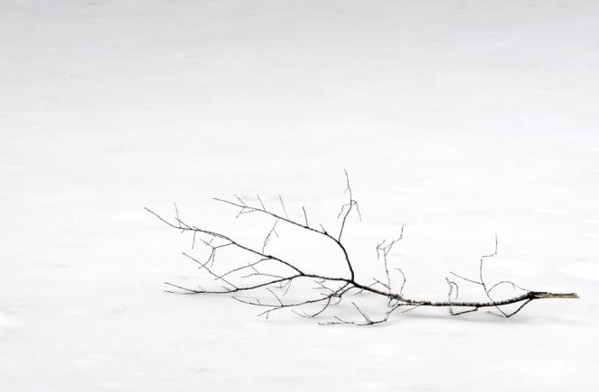 Zweig auf dem Boden