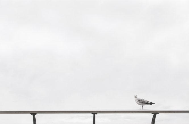 20 Fragen die dir niemand stellt, Vogel auf Geländer