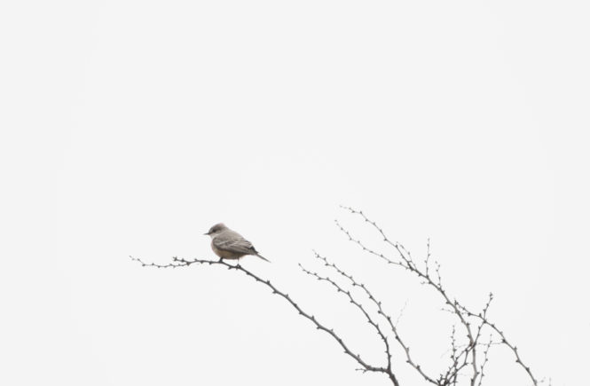 Weniger ist mehr: Vogel auf Ast