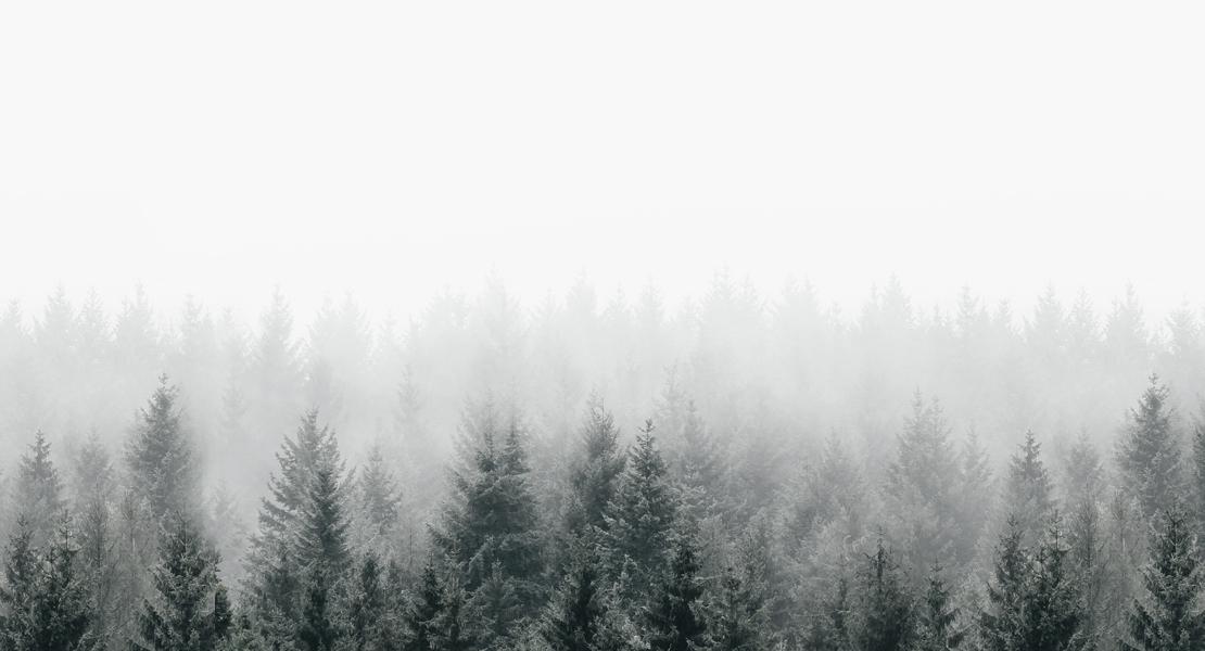 Stress vermeiden: Tannenbäume